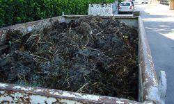 Biomasse entsorgen